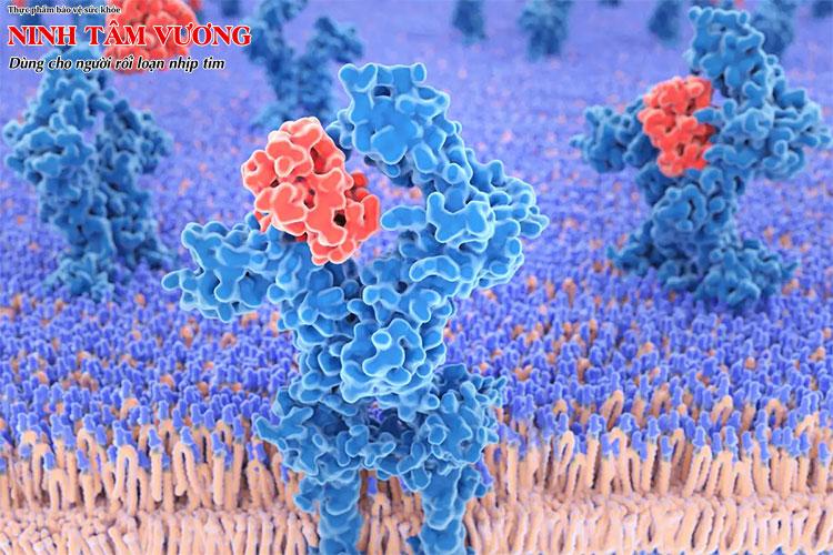 Ức chế miễn dịch là một cách để làm dịu cơn bão cytokine ở người nhiễm Covid-19 nặng
