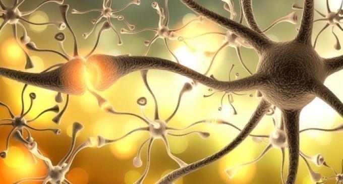 Thạch tùng tăng cường dẫn truyền và cải thiện khả năng ghi nhớ