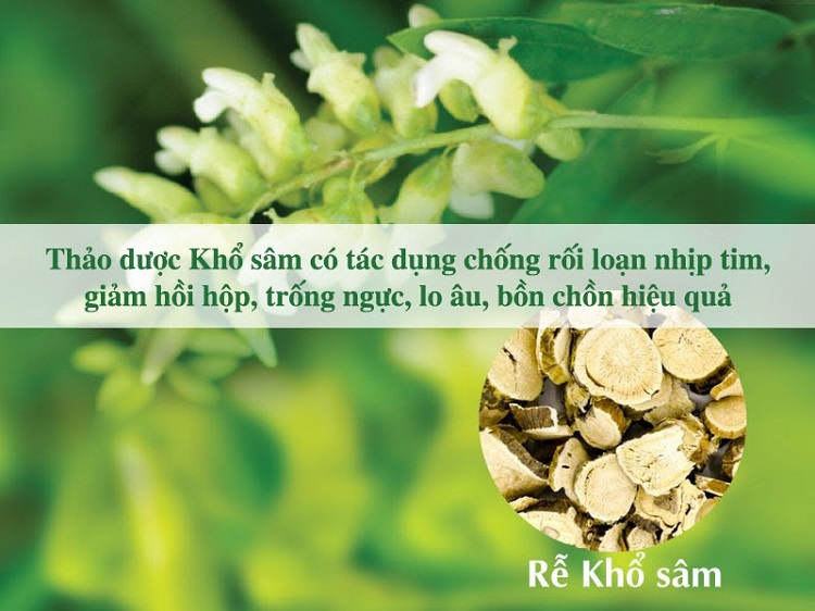 kho-sam-duoc-lieu-quy-khong-the-thieu-trong-cac-bai-thuoc-chua-roi-loan-nhip-tim.jpg