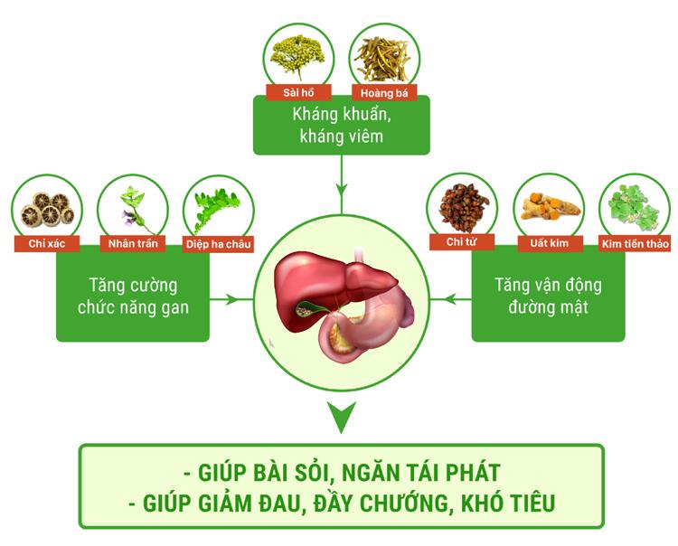 Tác dụng của bài thuốc 8 thảo dược quý trong hỗ trợ điều trị sỏi đường mật