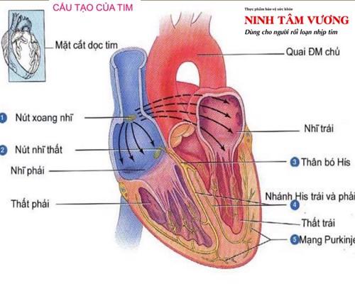 Hiểu về bệnh block tim là gì? & cách điều trị hiệu quả